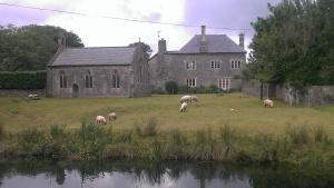 canal sheep